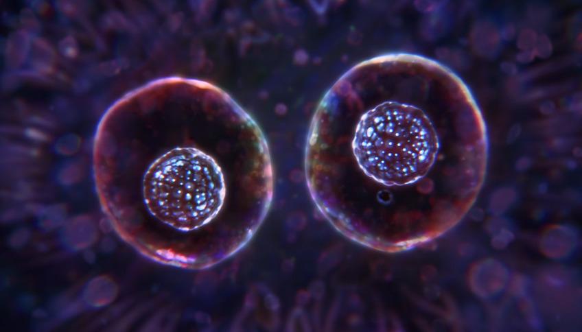 Thumb 1591391775 jonathanchua conceptthehouseofthescorpion visualstructure thumbnail